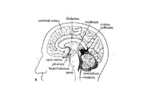 brain-res-open